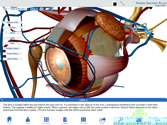 Human Anatomy Atlas from Visible Body APK Features