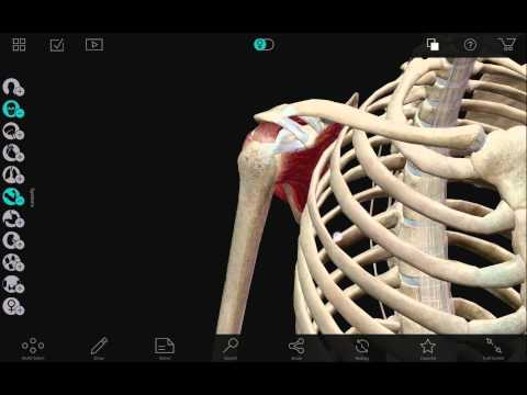 Human anatomy atlas 2017 unlocked apk free download.