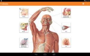 Free Sobotta Anatomy Atlas v2.9.4 APK Download