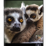 Pixomatic photo editor v3.6.7 [Premium] APK Free Download
