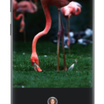 Z Camera – Photo Editor, Beauty Selfie, Collage v4.47 build 229 [Vip] APK Free Download