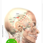 Acupuncture Assistant v5.1.0 (Paid) APK Free Download