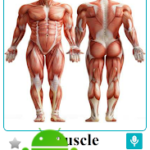 Body Parts Name and Pictures v20.2 [PRO] APK Free Download